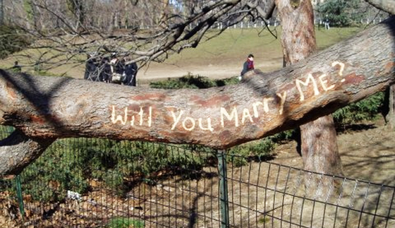 """Will you marry me?"" by Carlton Browne, used under a Creative Commons License (http://creativecommons.org/licenses/by/2.0/legalcode)"
